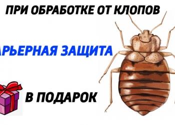 Уничтожение клопов и тараканов в Санкт-Петербурге.