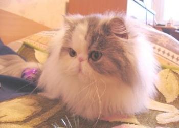 Кошка Олимпия