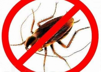 Истребление паразитов,тараканов,блох,крыс,мышей,клопов,клещей,муравьёв