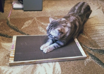 Новое поколение когтеточек-лежанок для кошек в Крыму.