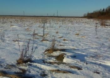 Продаю земельный участок категории земли промназначения  площадью 11,6 га