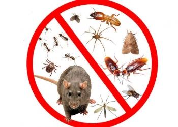 Тараканы, Клопы, Блохи и все виды насекомых