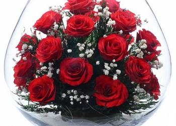 Цветы в вакууме, в стекле, розы алые