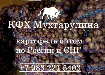 Картофель из Кемерово круглый год