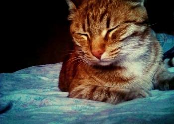 Продаю кросивый непожилеете дружелюбный кот.