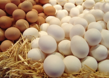 Яйцо куриное опт,розница