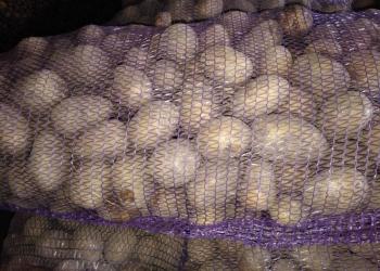 Продаем картофель свежий