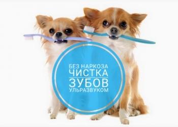 Чистка зубов собакам ультразвуком Без наркоза