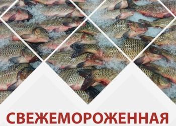 Свежемороженная рыба оптом