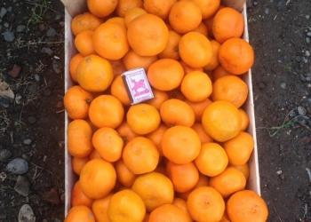 Абхазские мандарины оптом
