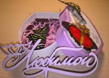 домашняя ферма бабочек
