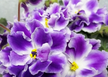 Готовый цветочный бизнес