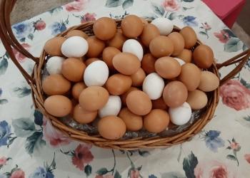 Про#яйцо